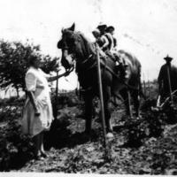 "Appolonia ""Franie"" (Heibel) Vogel with kids on a horse working on the farm - circa unknown"