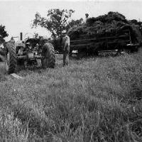 Threshing on William Bongard farm - 1947